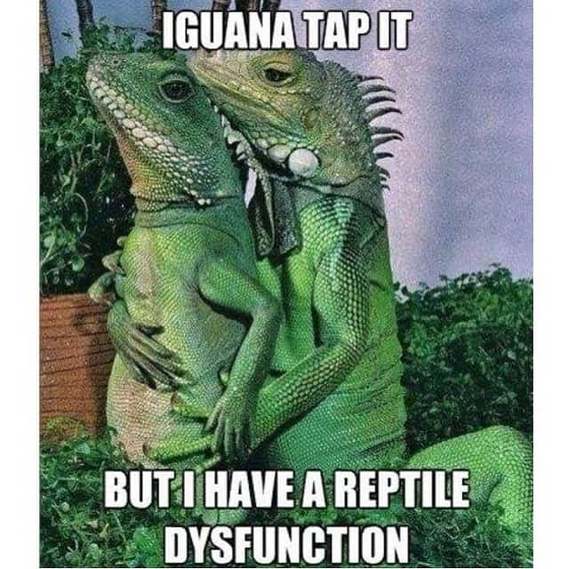 Valentines Day meme with two iguanas
