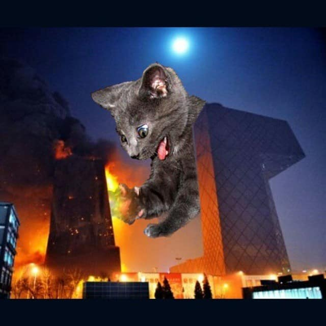 Huge cat and building on fire