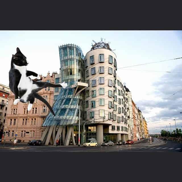 Mike Riscica architecture cat meme