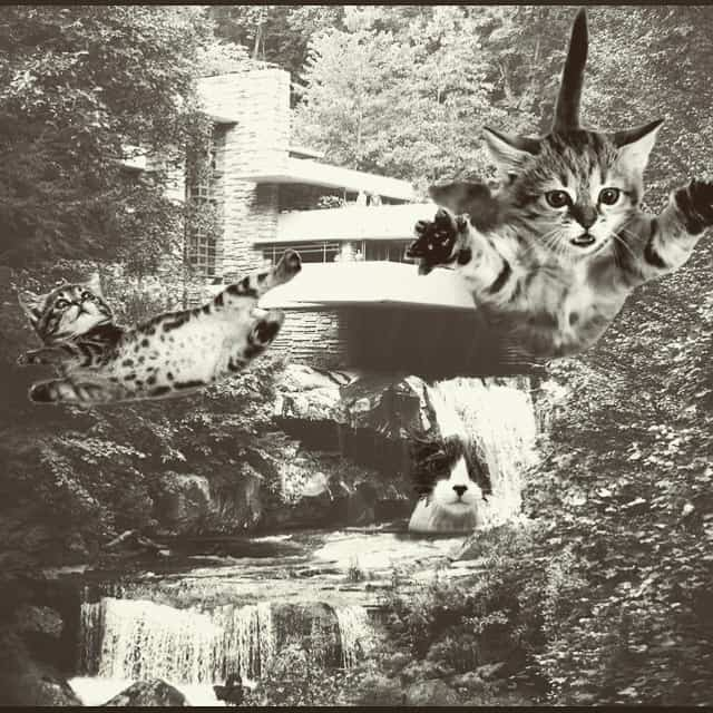 Falling Kittens meme in black and white
