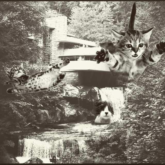 Falling Kittens meme in black and white