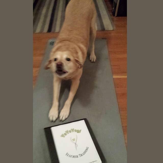 Dog doing Yoga involunterly