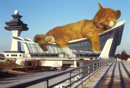 Furrrocious-Forms-lol-cats-07