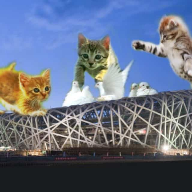 Cats attacking The Birds Nest!