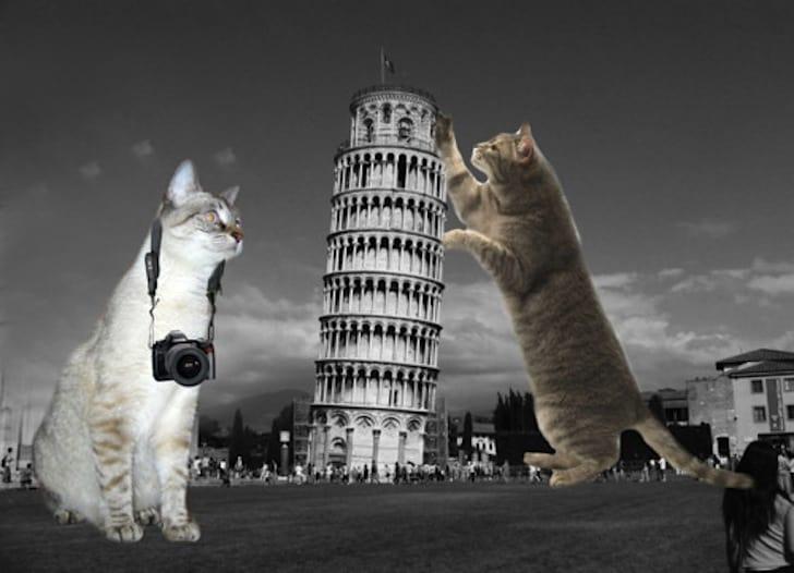 LOLcats-Furrocious-forms-5