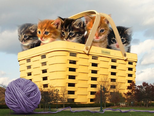 NBBJ's adorable basket of kittens
