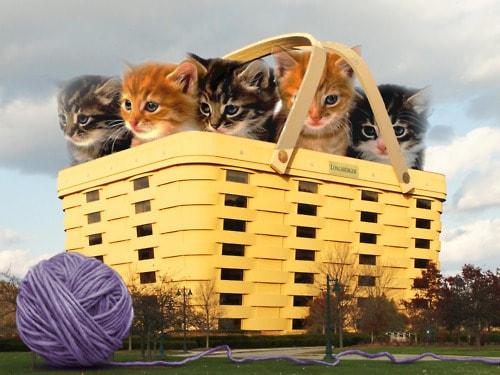 NBBJ's adorable basket of kittens