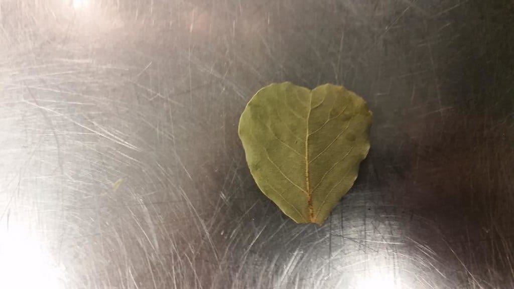 Autumn leaf that fell from a tree