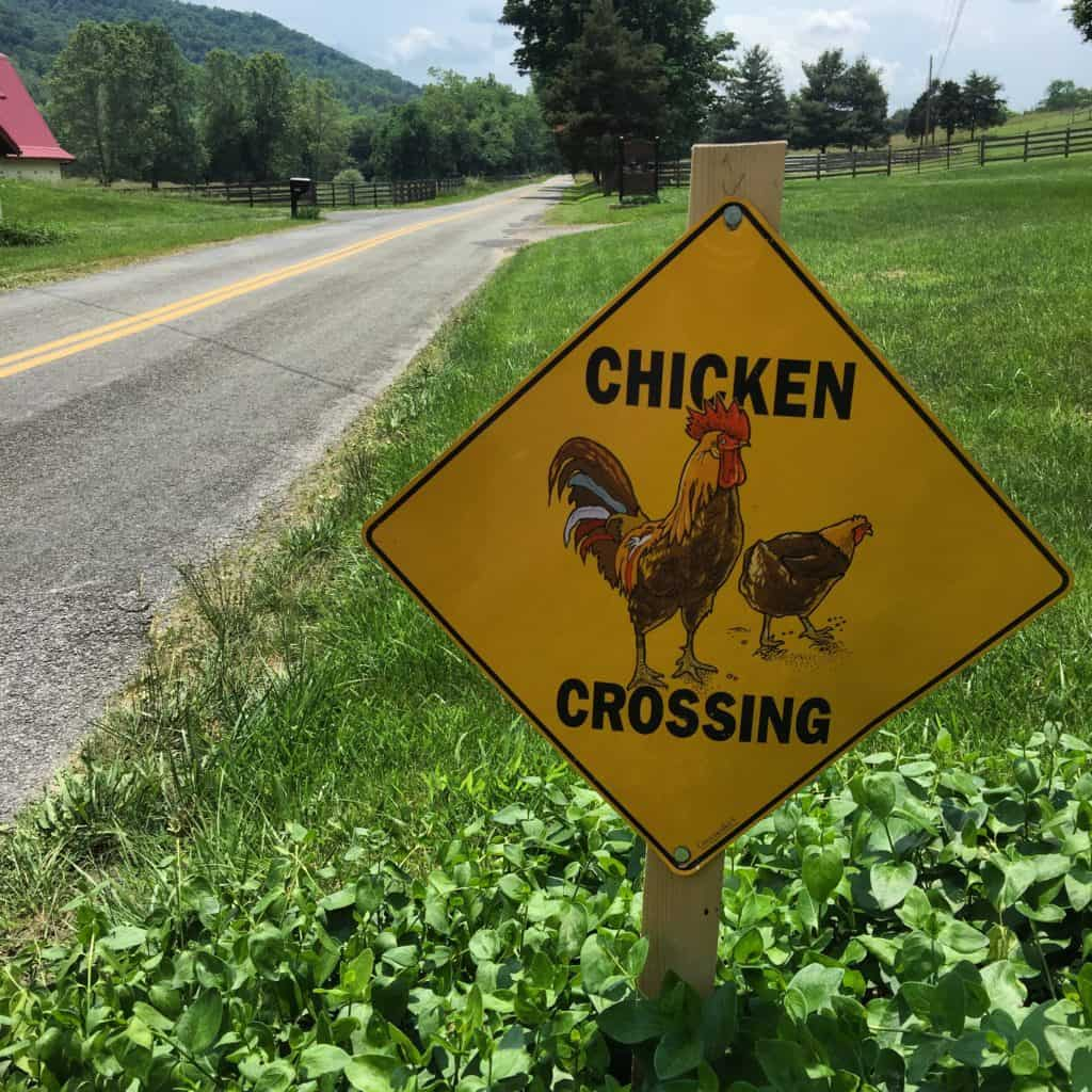 Why'd the chicken cross the road? #biketouring #transamerica2016 #chickens