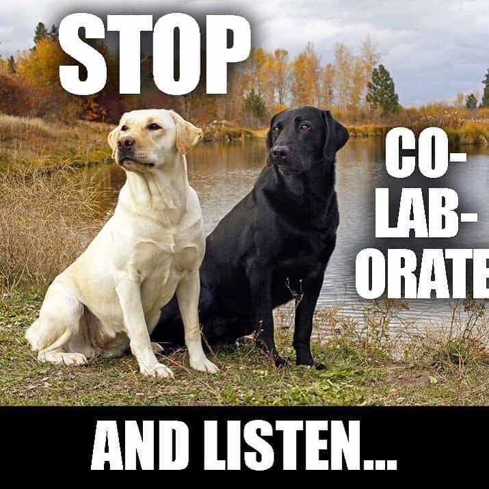 Word to ya mutha! #labsofinstagram #labs #labsofportland #labstagram #labradorable #labradorretriever #mollythedog #labradors #labradoroftheday