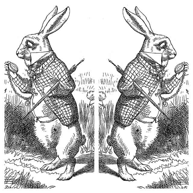 Split black and white picture with rabbits