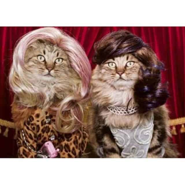 Cats being dressed up funny