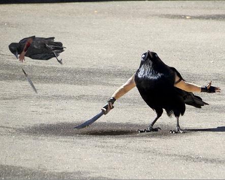 Samurai Pigeons.