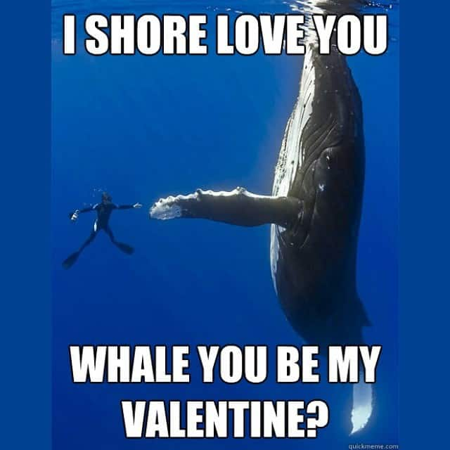 Funny Valentines Day card with a whale
