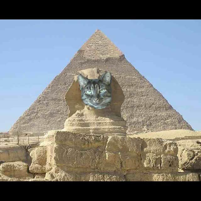 Giant cat head in a pyramid