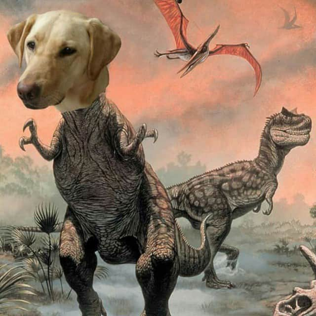 Dog photoshopped into a T-Rex