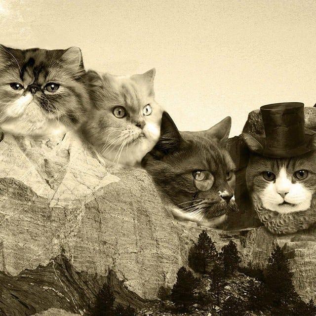 Meow Rushmore