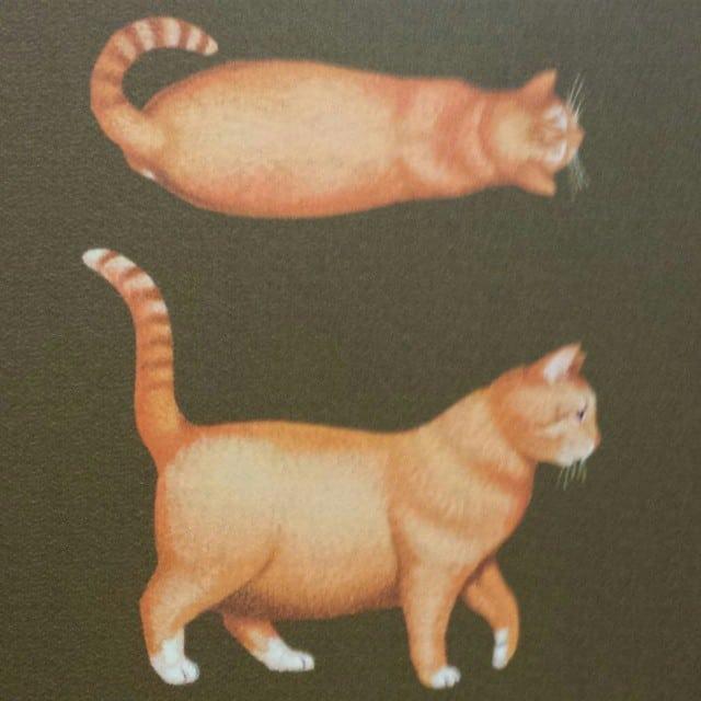 a fat orange cat
