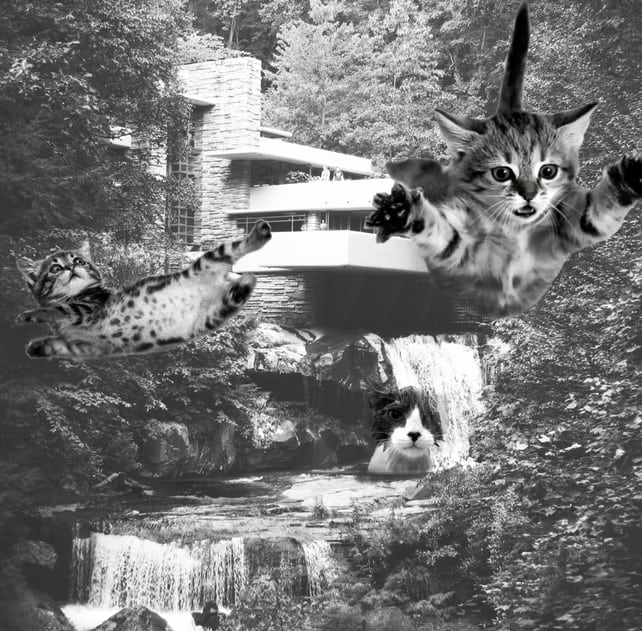 The Classic Falling Kittens