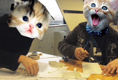 crazy-cats1
